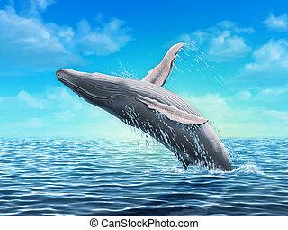 saltar, ballena, jorobado