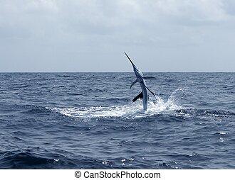 saltar, deporte, sailfish, agua salada, pesca