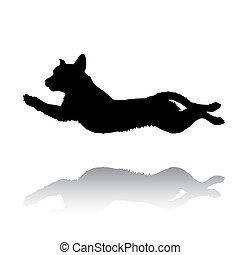saltar, perro cobrador