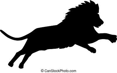 saltare, leone