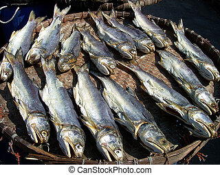 Salted fish being dried under the sun