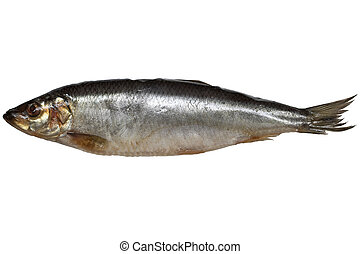 Common Atlantic salted herring isolated over white background
