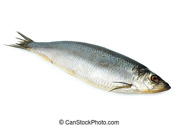 Salted herring isolated on the white background