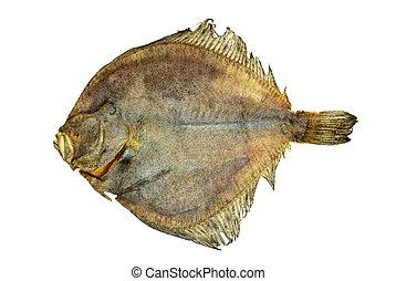 Salted turbot flatfish isolated on the white background