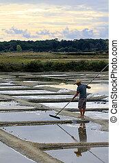 Saltern in marshes (Ile d'Olonne - France)