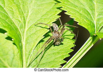 Jumping spiders and jumping spiders war