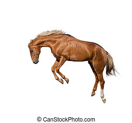 salto cavallo, giovane