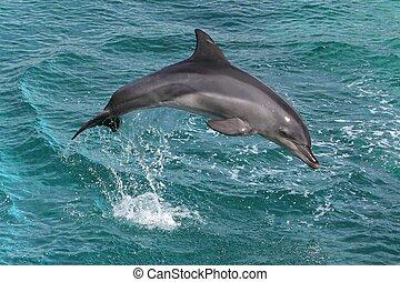 salto, delfín