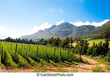 saltos, campo, en, george, sudáfrica