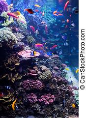 Saltwater Aquarium Tropical Fish - A saltwater fish tank...