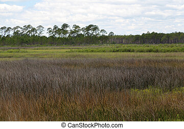 Saltwater marsh at Bald Point State Park Florida with clouds...