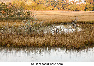 Saltwater Wetland Marsh