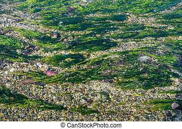 Saltwatert Stream Closeup