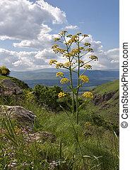Salutary flower - A blossoming meadow about stream Gelabun...