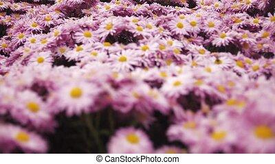 salutation, fleurs, papillons, abeilles, fond, carte