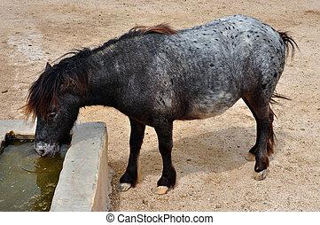 salvaje, agua, bebida, poney,  skyrian