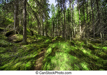 salvaje, bosque
