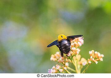 salvaje,  bumble, flor, abeja, Sentado