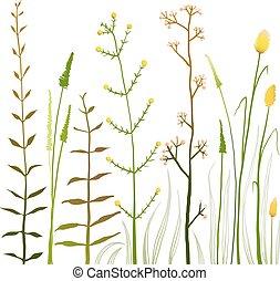 salvaje, campo, flores, y, pasto o césped, blanco, colección