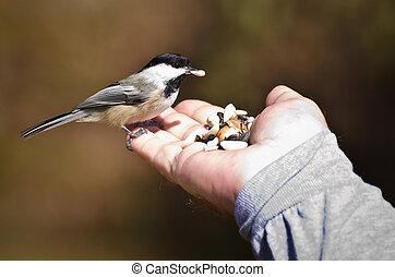salvaje, comida, pájaro, mano