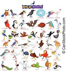 salvaje, de par en par, conjunto, aves, variedad