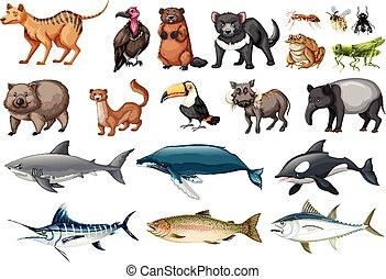 salvaje, diferente, conjunto, animales, tipos