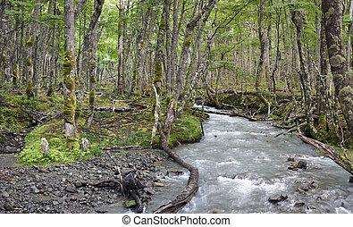 salvaje, el, bosque, patagonian, chalten