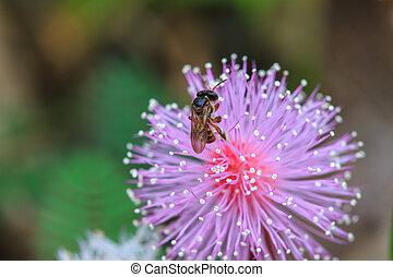 salvaje, flor, abeja, Sentado