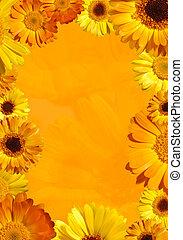 salvaje, flor anaranjada, plano de fondo