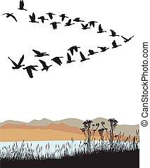 salvaje, otoño, encima, emigrar, gansos