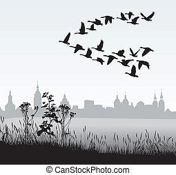 salvaje, país, emigrar, gansos