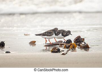 salvaje, playa, grupo, aves
