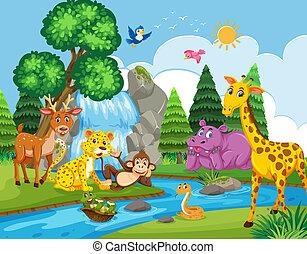 salvaje, río, animales, luego