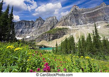 salvaje, rastro, flores, iceberg, lago