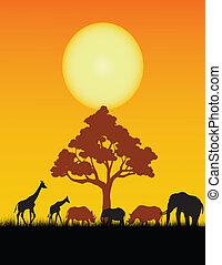 salvaje, silueta, animal