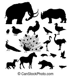 salvaje, siluetas, animal