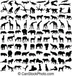 salvaje, siluetas, cien, animales