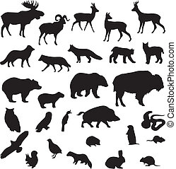 salvaje, Siluetas, Conjunto, animales,  vector