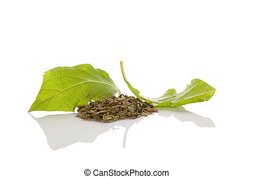 Salvia divinorum. - Salvia divinorum fresh and dried leaves...