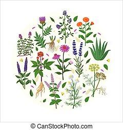 salvia, flores, tomillo, alfalfa, fondo., vera, áloe, vector...