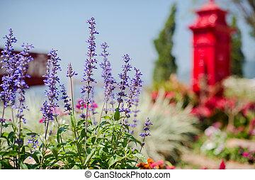 Salvia flower in the garden closeup