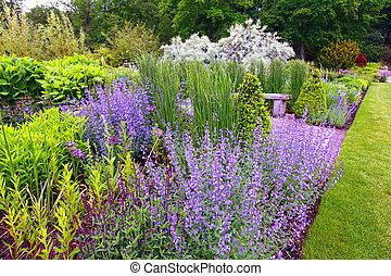 salvia, jardin, landscaping, fleurir
