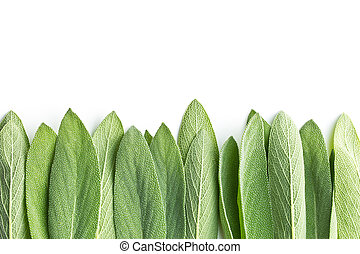 Salvia officinalis. Sage leaves. - Salvia officinalis. Sage...