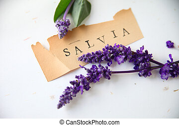 Salvia word with flowers