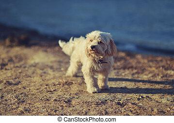 salzig, hund