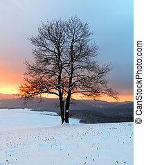 sam, drzewo, w, zima, wschód słońca, krajobraz, -, natura