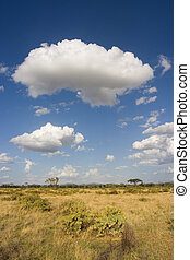 samburu, landscape