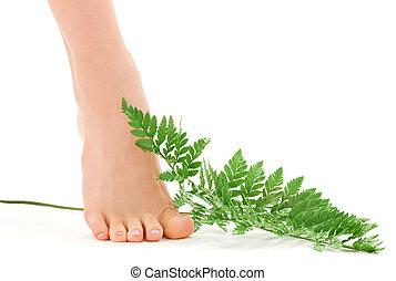samica, stopa, z, zielony, paproć liść