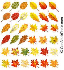 samling, i, farve, efterår forlader