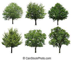 samling, træ, isoleret, på hvide